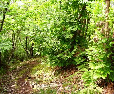 camino-bosque3.jpg